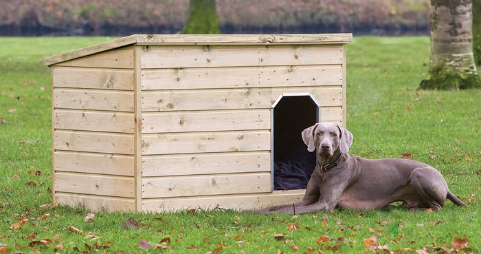 Как приучить собаку жить в будке?