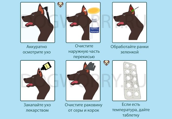 Лечение отита у собак