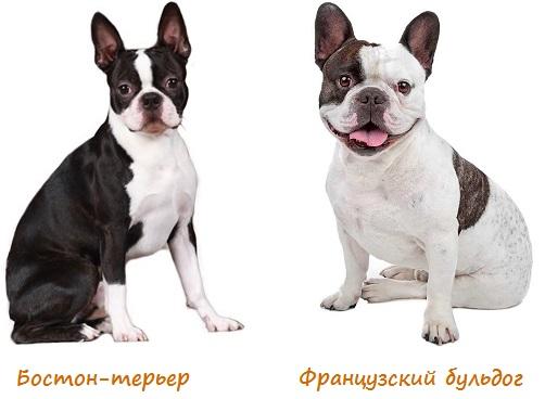 Основные параметры собак