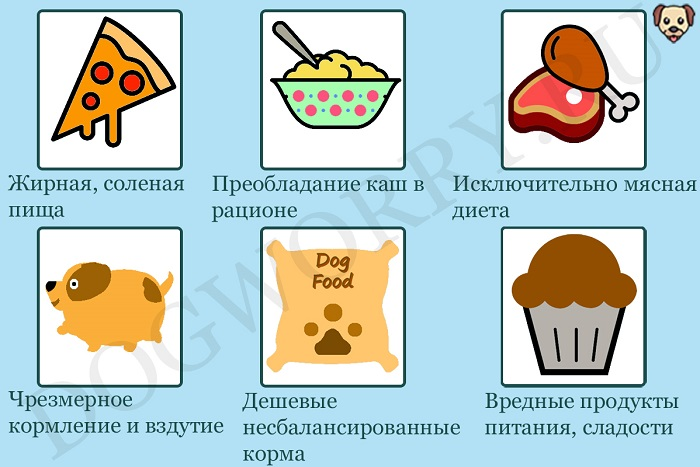 Почему собака ест экскременты других животных?