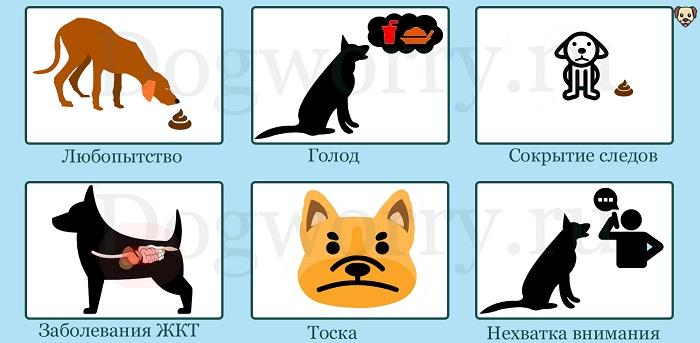 Почему собака ест кал?