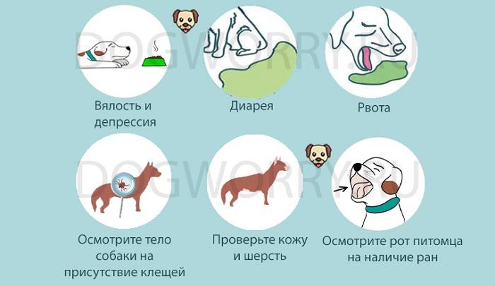 Почему собака не ест сухой корм?