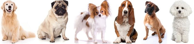 Какие породы собак дружелюбны к кошкам?