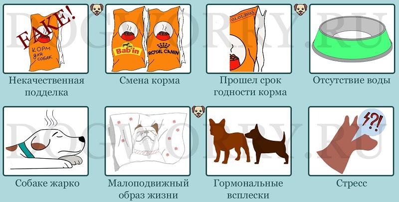 Причины, по которым собака не ест сухой корм