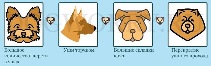Причины возникновения отита у собак