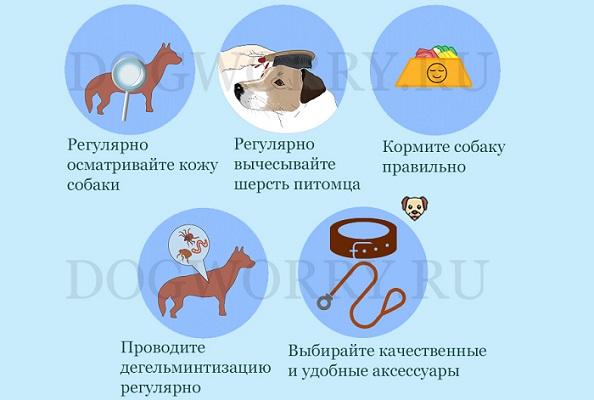 Профилактика алопеции у собак