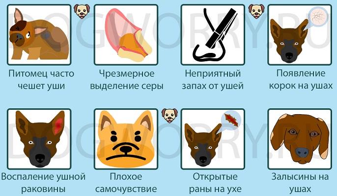 Симптомы отита у собак