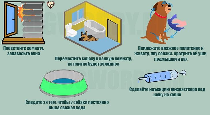 Что делать, если у собаки высокая температура?