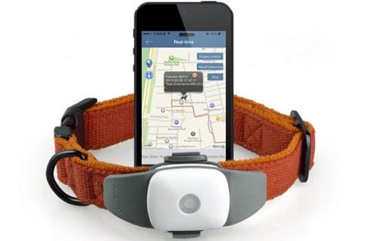 Как правильно выбрать GPS ошейник питомцу?