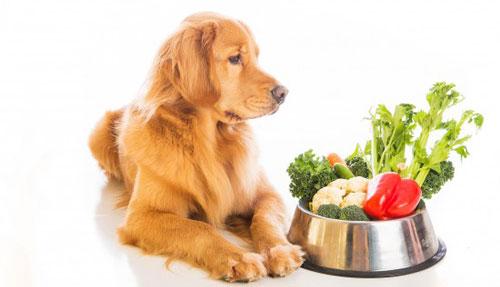 Нужно ли давать собакам овощи?