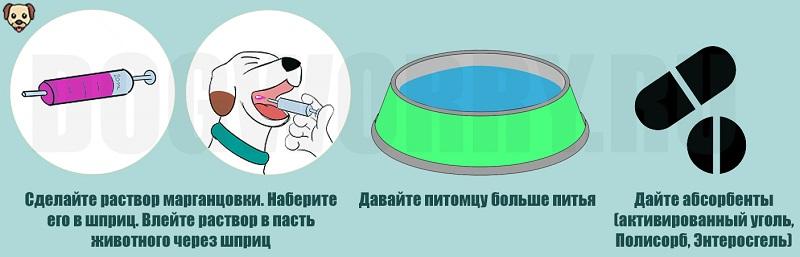 Пищевое отравление у собаки