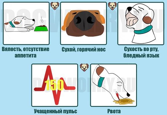 Признаки повышенной температуры у собак