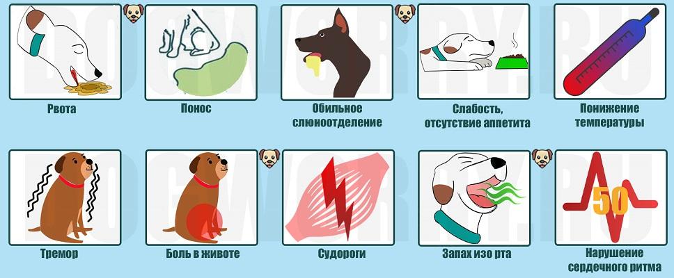 Симптомы отравления у собак