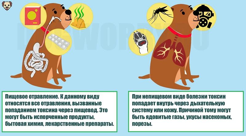 Виды отравления у собак