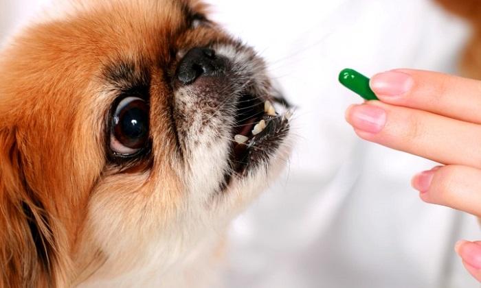 Инструкция по применению Стоп Стресс для собак