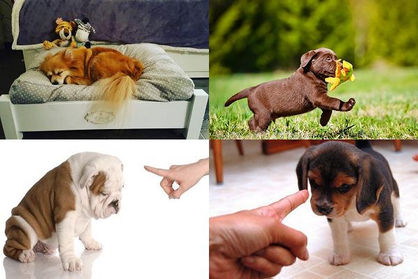 Как отучить щенка скулить и выть?