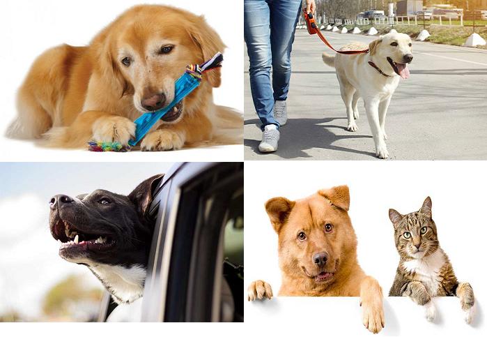 Как отучить выть взрослую собаку?