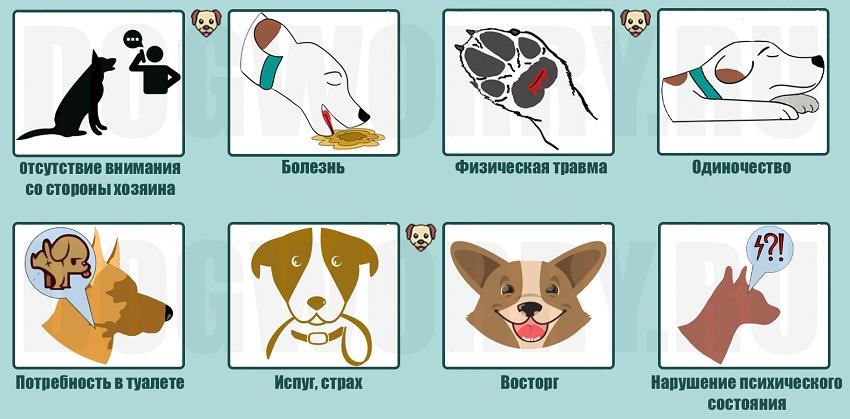 Почему собаки скулят?