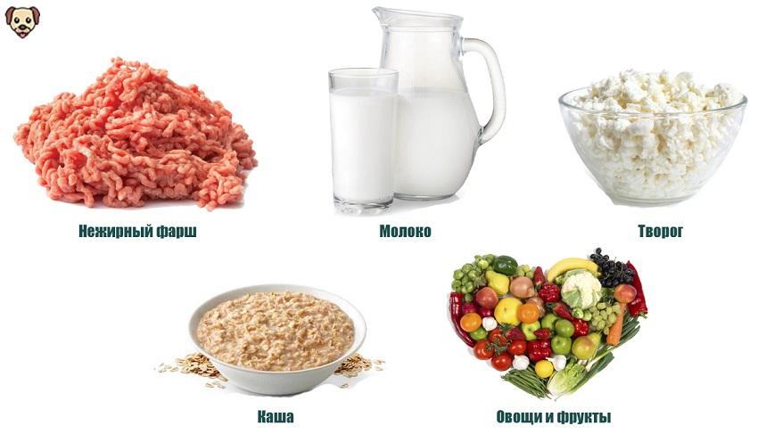 Чем кормить алабая в 2 месяца жизни?