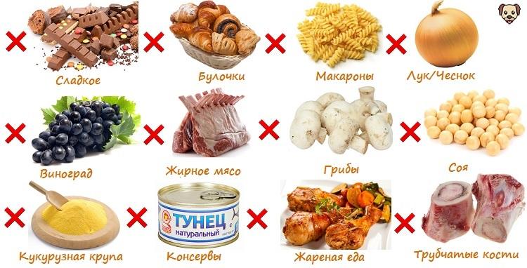 Чем нельзя кормить алабая?