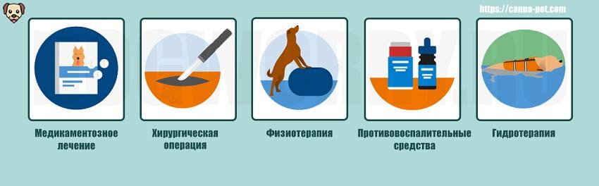 Лечение паралича у собак