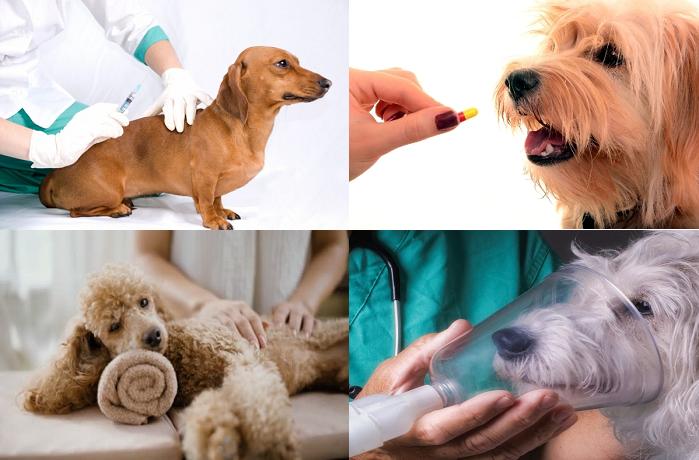 Лечение пневмонии у собак