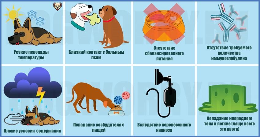 Причины воспаления легких у собак