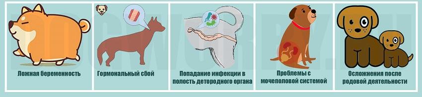 Причины возникновения болезни у животных