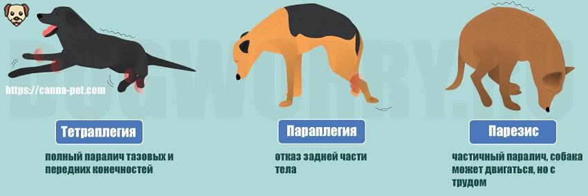 Разновидности паралича у собак