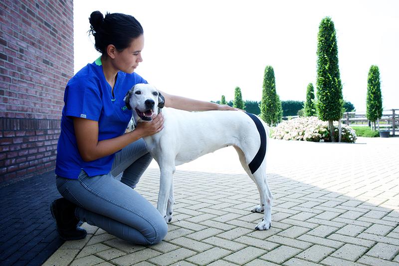 Реабилитация пса после перелома