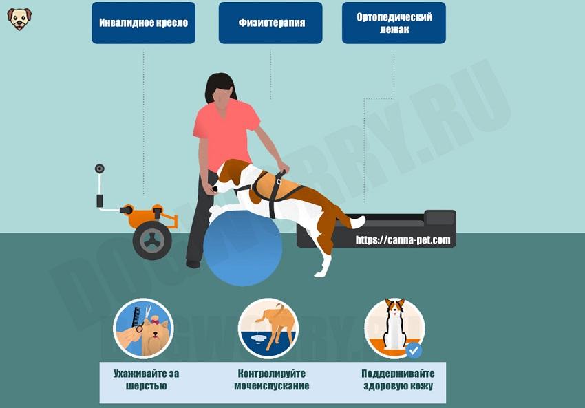 Реабилитация собаки после болезни