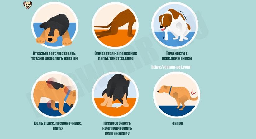 Симптомы паралича у собак
