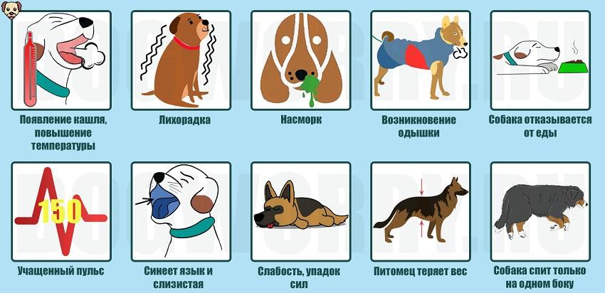 Симптомы пневмонии у собак