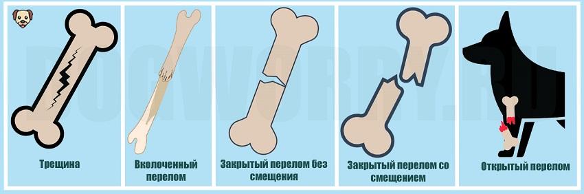 Виды переломов у собак