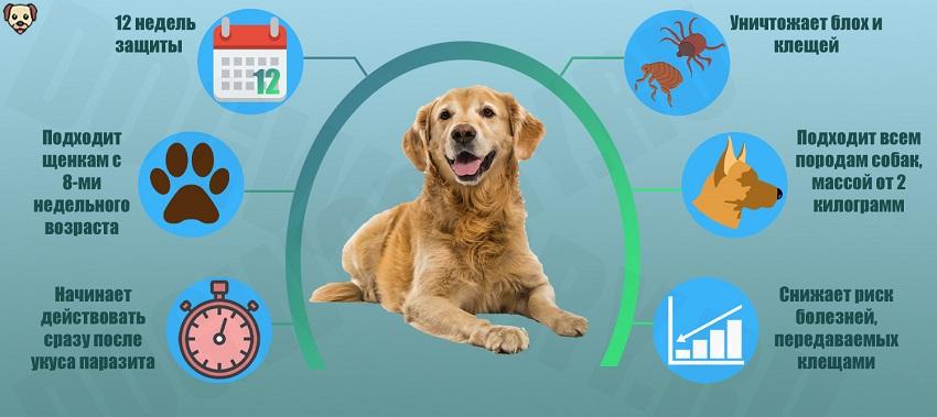 Что такое Бравекто для собак?