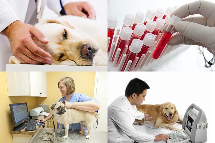 Как диагностируется сердечная недостаточность у собак