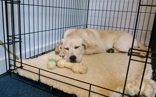 Как отучить собаку спать на одной кровати с хозяином?