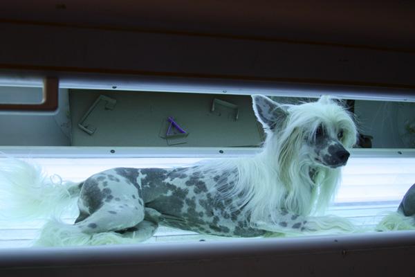 Лечение рахита у собак