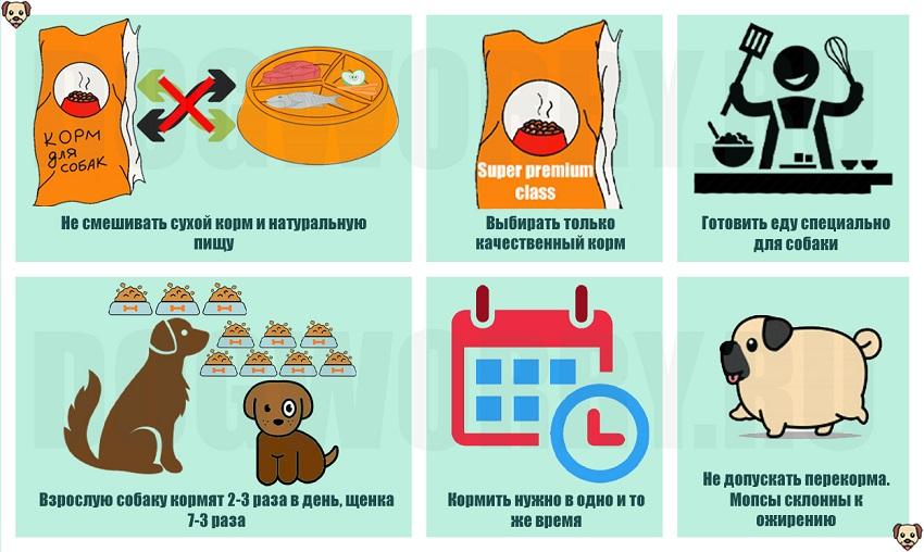 Основные правила питания для мопсов