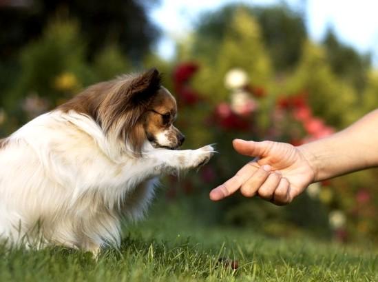 Передается ли бруцеллез человеку от собак?