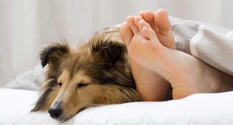 Почему собака стремится спать на кровати с хозяином?