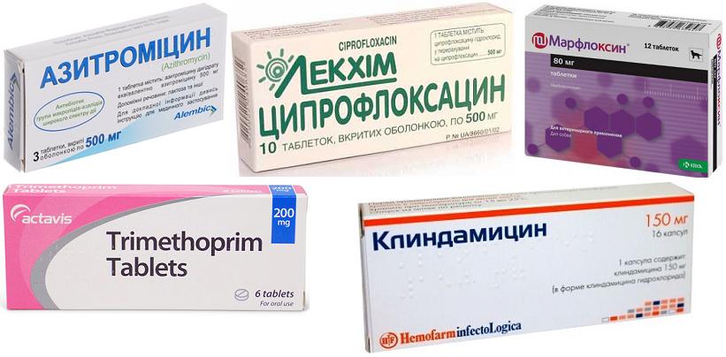 Препараты для лечения простатита у собак