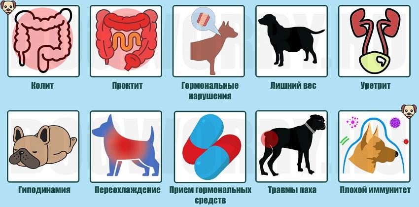 Причины недуга у животных
