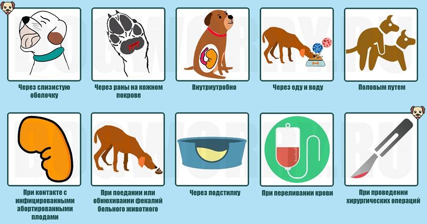 Причины заболевания у собак