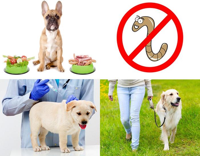 Профилактика сердечной недостаточности у собак