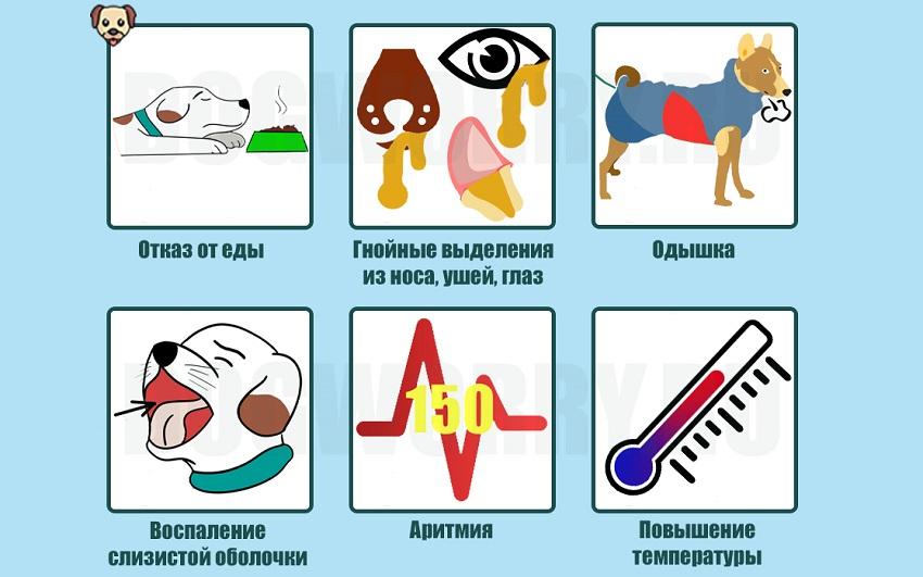 Симптомы хламидиоза у собак