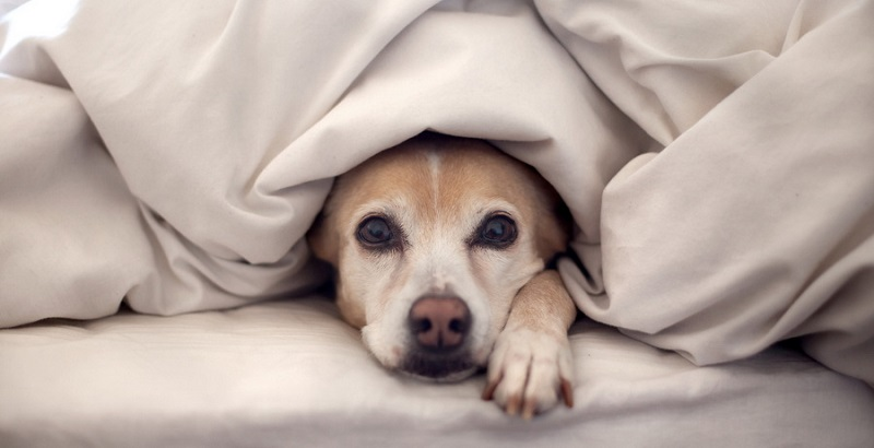 Собаке холодно