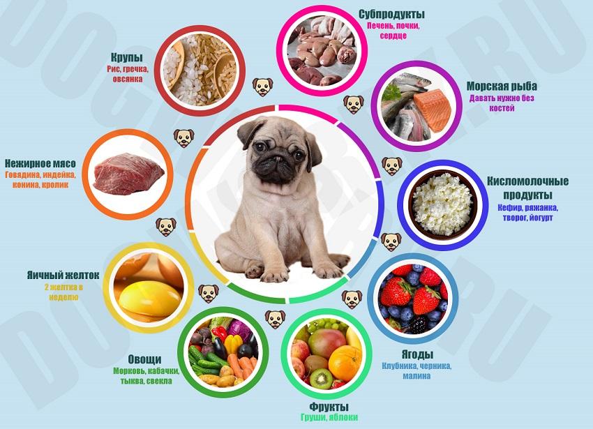 Список продуктов для натурального рациона