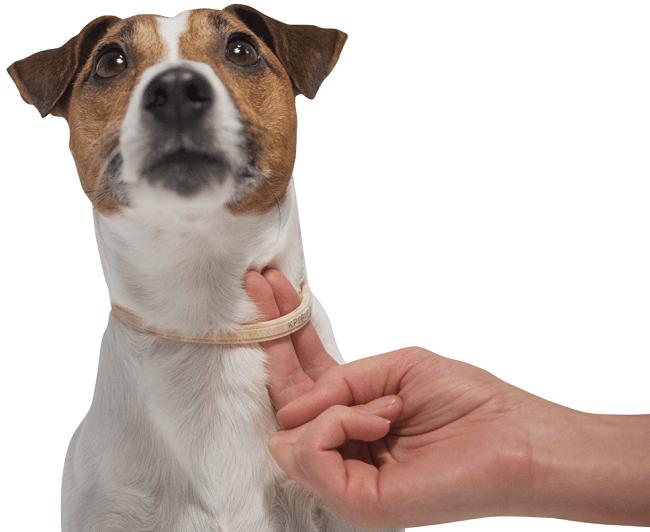 Закрепить ошейник на шее у собаки