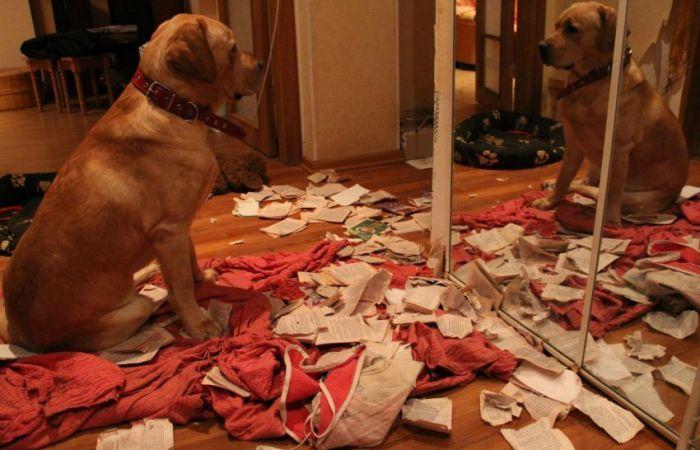 Чем грозит собаке одиночество?